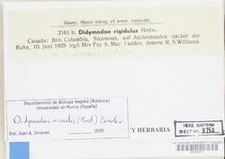 Didymodon vinealis image