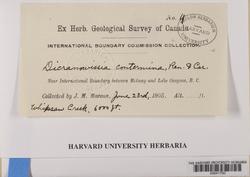 Hymenoloma crispulum image