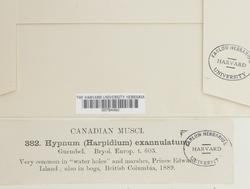 Sarmentypnum exannulatum image