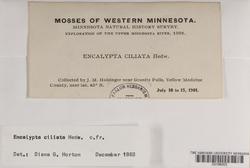 Encalypta ciliata image