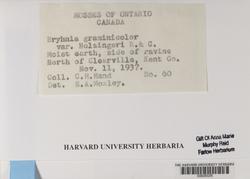 Bryhnia graminicolor image