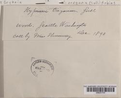 Kindbergia oregana image
