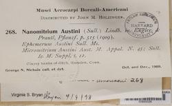 Micromitrium tenerum image