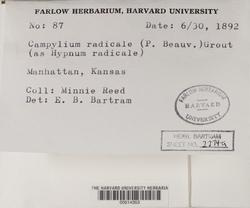 Campylium radicale image