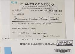 Grimmia montana image