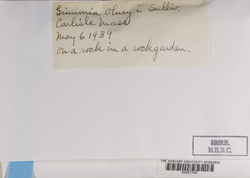 Grimmia olneyi image
