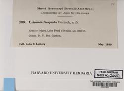Grimmia torquata image