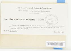 Gymnostomum aeruginosum image
