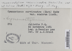 Hymenostylium recurvirostrum image