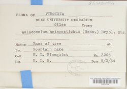 Aulacomnium heterostichum image