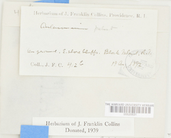 Thumbnail image of sheet