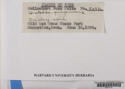 Ceratodon purpureus image