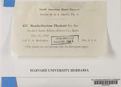 Brachythecium erythrorrhizon image