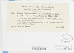 Bryum dichotomum image