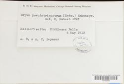 Ptychostomum pseudotriquetrum image