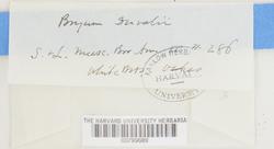 Ptychostomum weigelii image