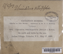 Claopodium whippleanum image