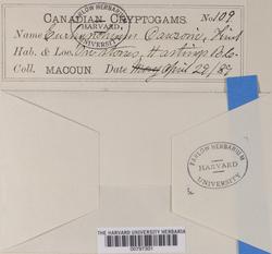 Eurhynchium dawsonii image