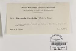 Bartramia ithyphylla image