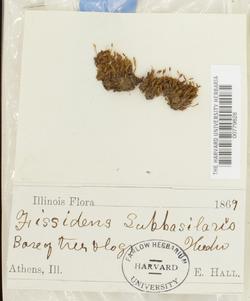Fissidens subbasilaris image