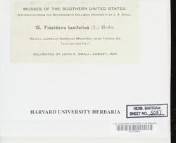 Fissidens taxifolius image