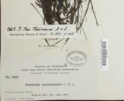 Fontinalis neomexicana image