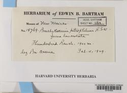 Sciuro-hypnum plumosum image