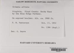 Grimmia fuscolutea image