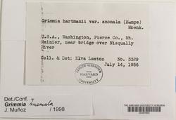 Grimmia anomala image
