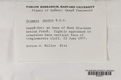 Grimmia anodon image