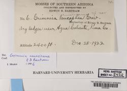 Grimmia americana image