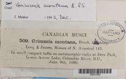 Grimmia donniana image