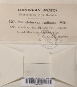 Lescuraea radicosa image