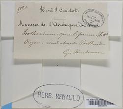 Pseudisothecium stoloniferum image