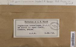 Pogonatum pensilvanicum image