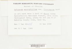 Sphagnum cribrosum image