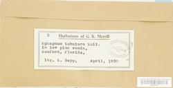 Sphagnum molle image