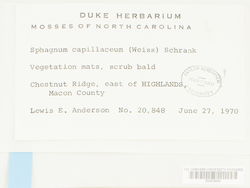 Sphagnum capillifolium image