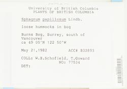 Sphagnum papillosum image