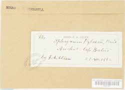 Sphagnum pylaesii image