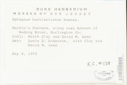 Sphagnum quinquefarium image