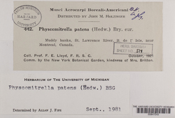 Physcomitrella patens image