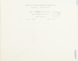 Sphagnum rubellum image