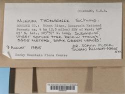 Mnium thomsonii image
