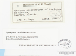 Sphagnum carolinianum image