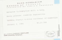Sphagnum cyclophyllum image