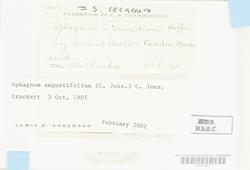 Sphagnum angustifolium image