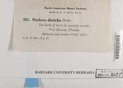 Neckeropsis disticha image