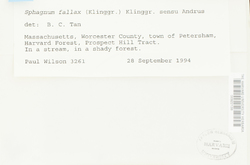 Sphagnum fallax image