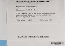 Plagiothecium latebricola image
